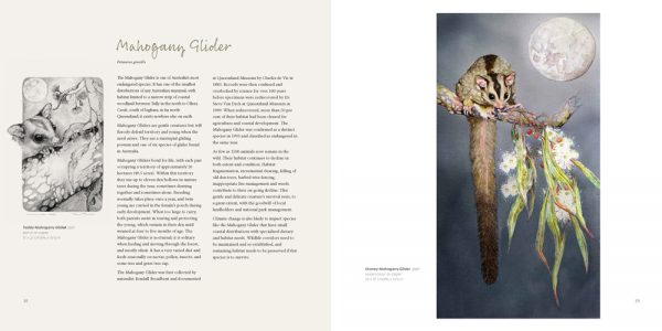 sample page showing artwork and information about the mahogancy glider