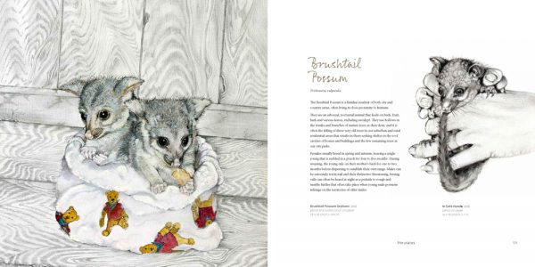 sample page showing artwork of two brushtail possums in a blanketand information about the brushtail possum by daryl dickson